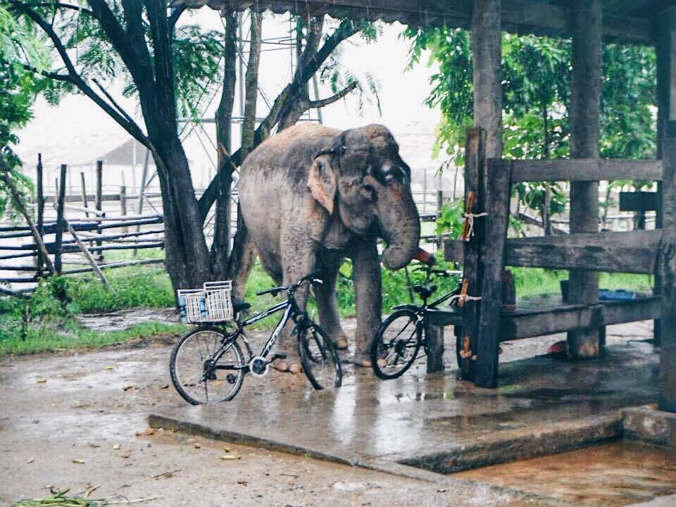 Best place to see elephants in Thailand? - reddit.com