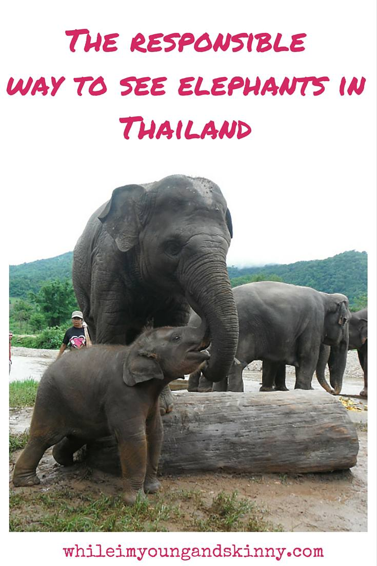 responsible elephant tourism in Thailand