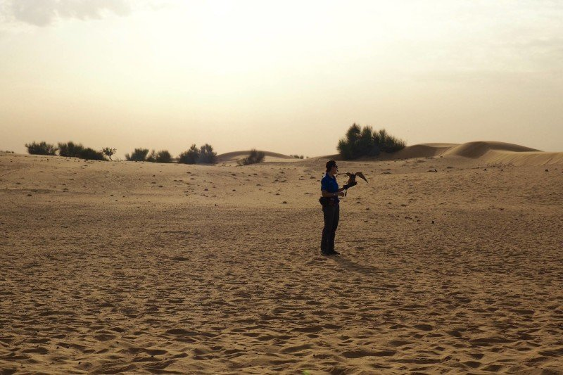 lady with falcon in desert