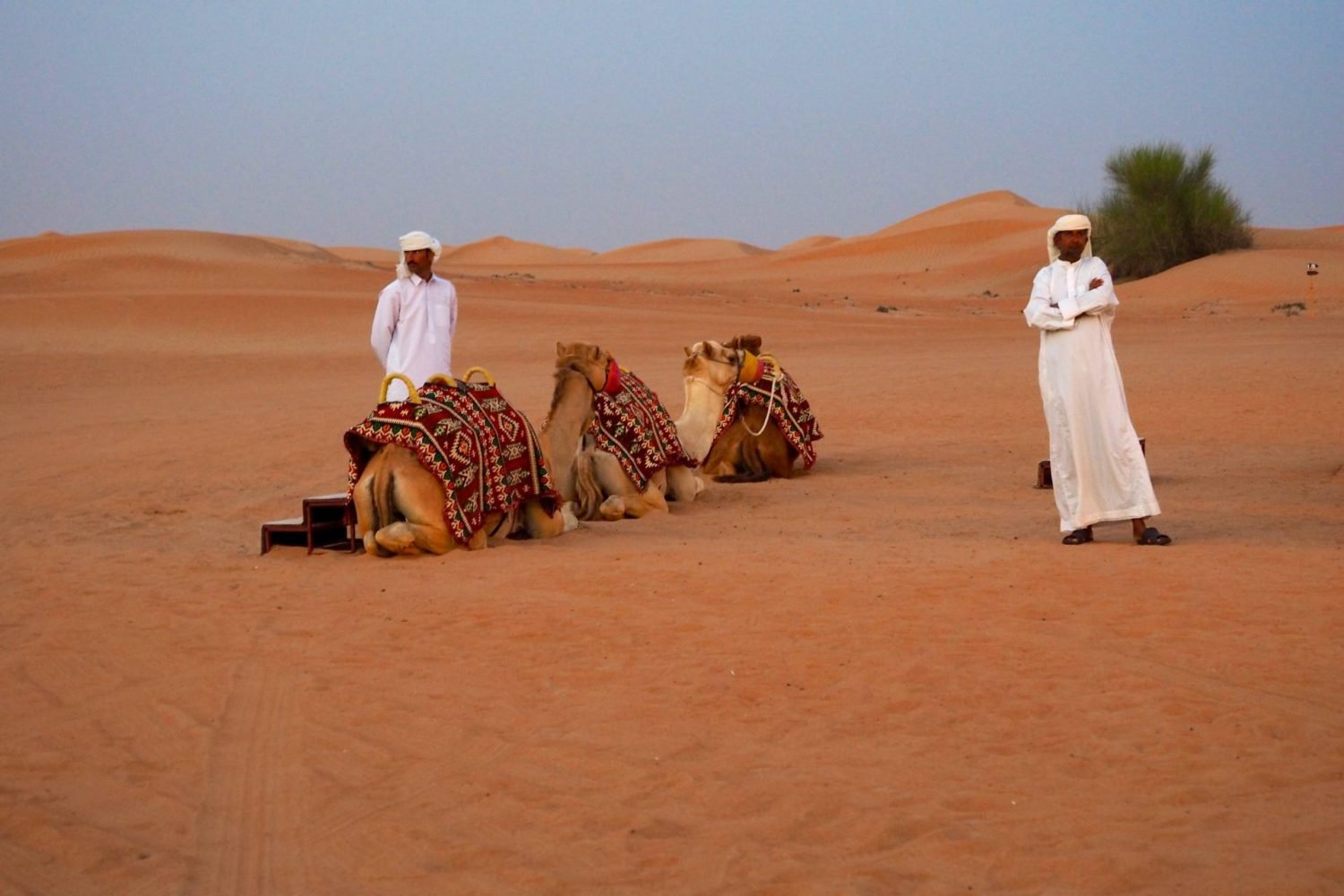 Camels and arab men sitting in the desert