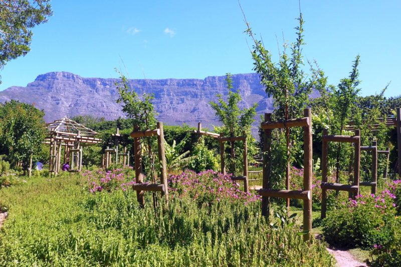 what to do with three days in Cape Town: garden