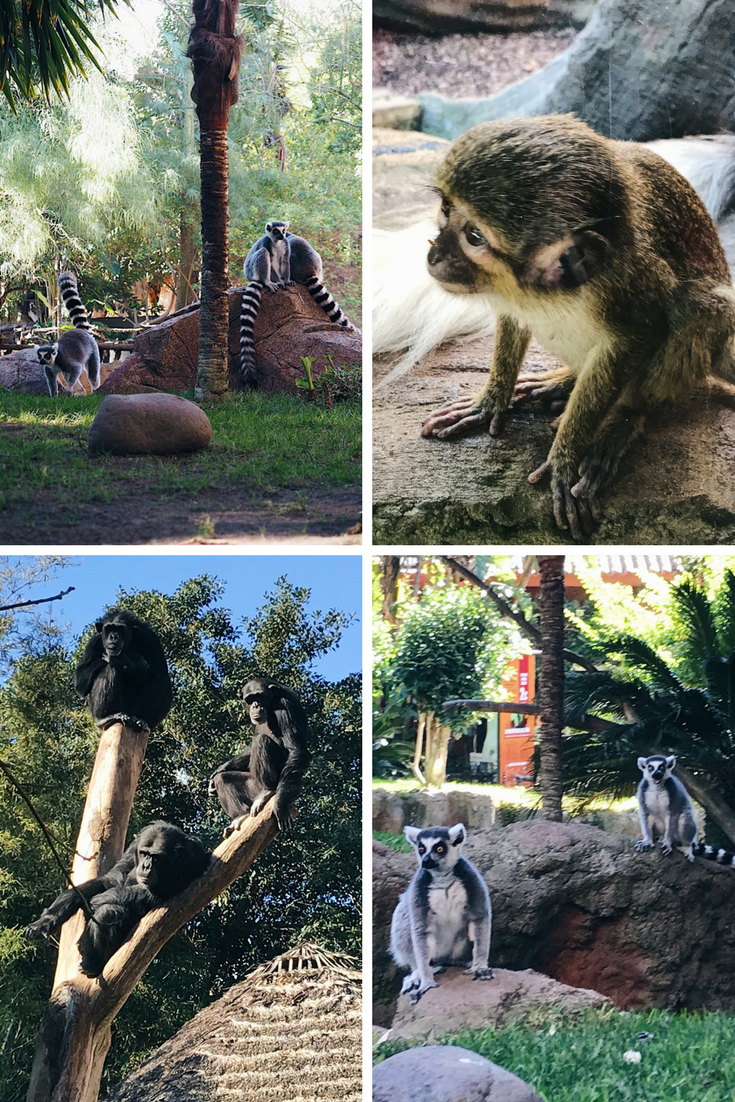 Things to do in Costa del Sol: responsible animal tourism at Bioparc